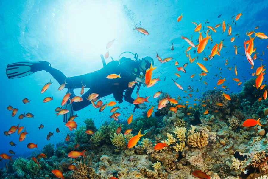 Seis dicas para quem quer começar a mergulhar