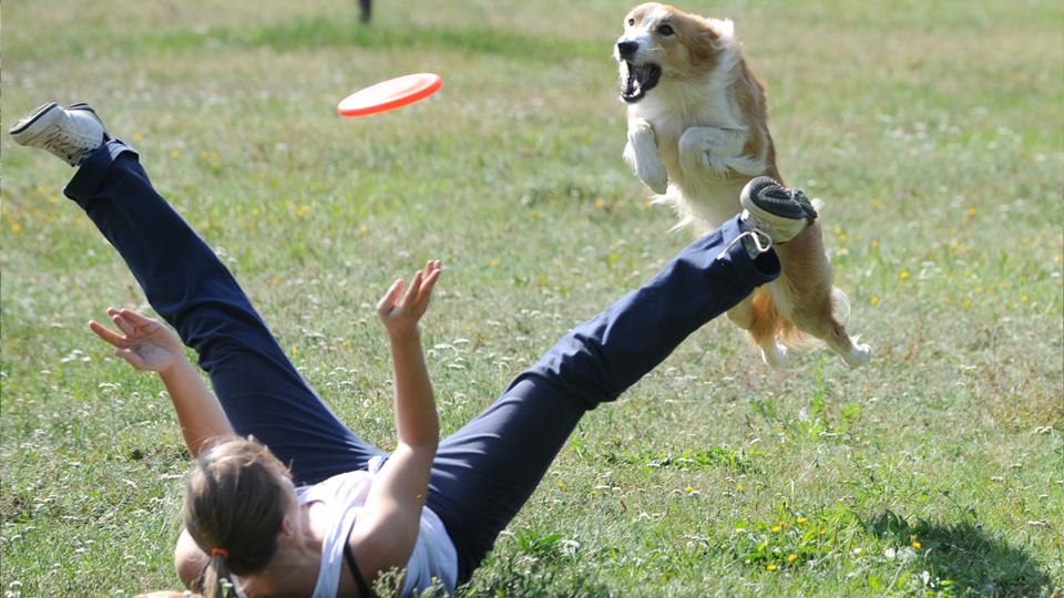 Corrida, bicicleta e até yoga: Os cães também podem ser seus melhores amigos na hora de se exercitar
